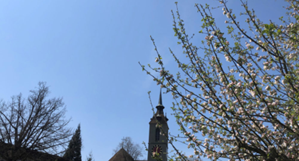 Kirche Apfelbaum Frühling sm1 Slider